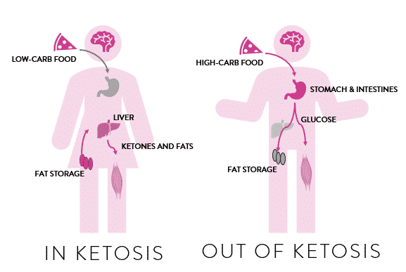 Ketosis: where does the energy come from